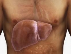 Жировая инфильтрация печени, как результат употребления алкоголя