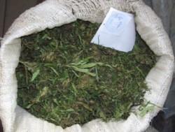 В Севастополе изъяли 4,5 кг марихуаны и 1,5 литров опия