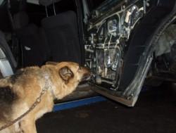 В автомобиле было найдено 17 кг наркотиков
