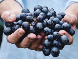 Эффект виноградной грозди