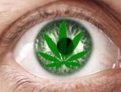 Легализация марихуаны – прямой путь к росту наркомании