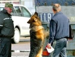 Любитель конопли был пойман «пушистым пограничником»